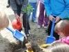 Gyümölcsfákat kapott az önkormányzattól a ferencvárosi Kerekerdő óvoda